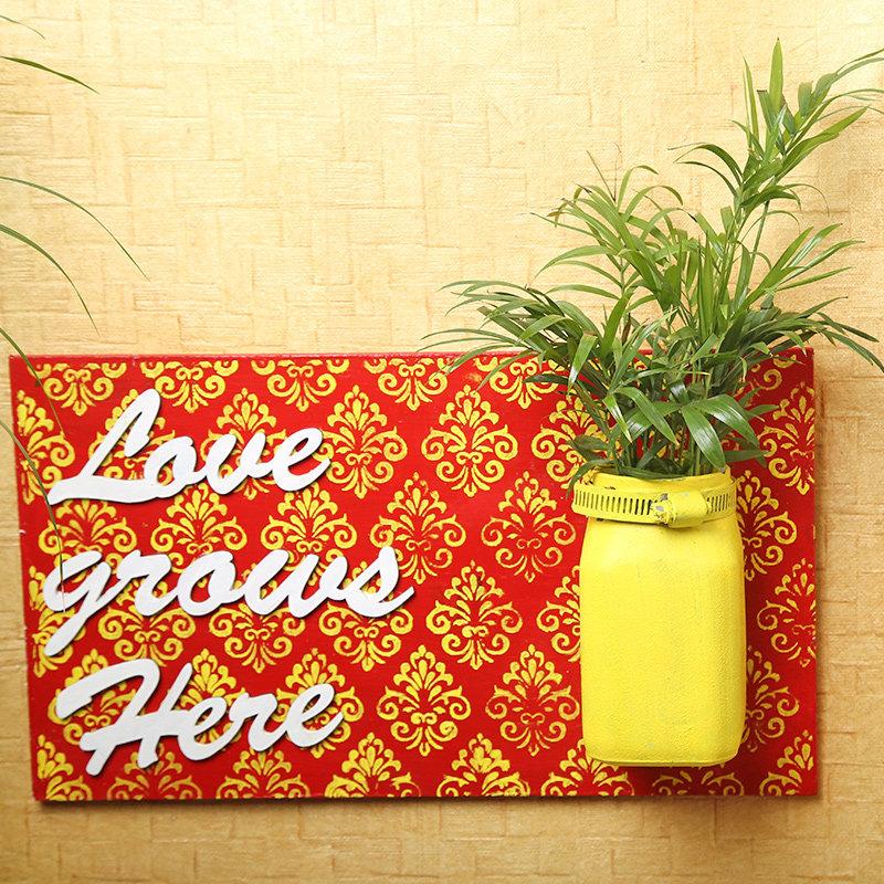 Charming Handmade Chemendorea Plant