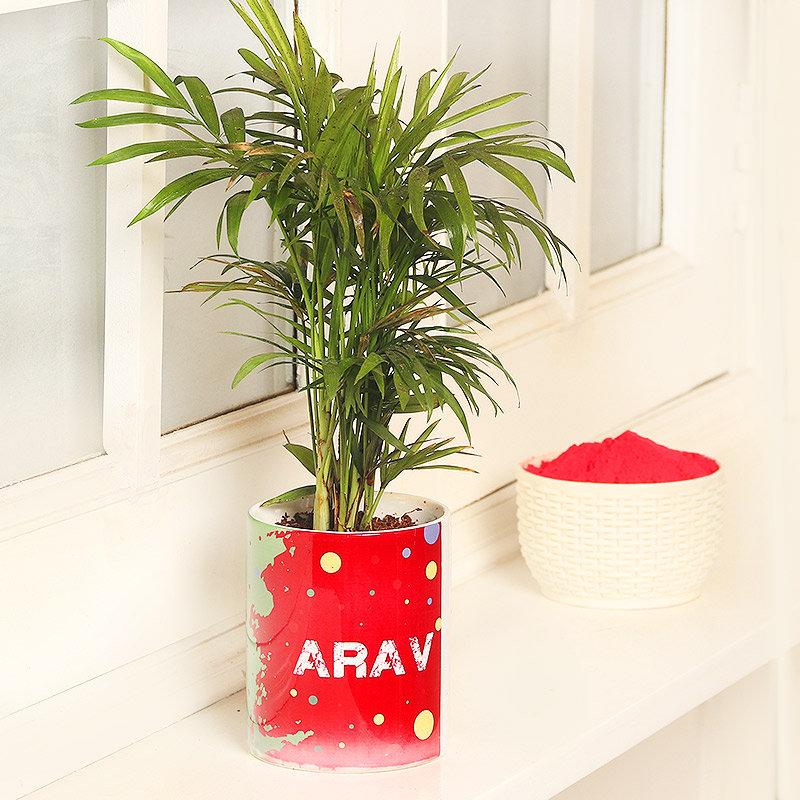 Personalised Chamaedorea Plant with Gulal Holi Combo