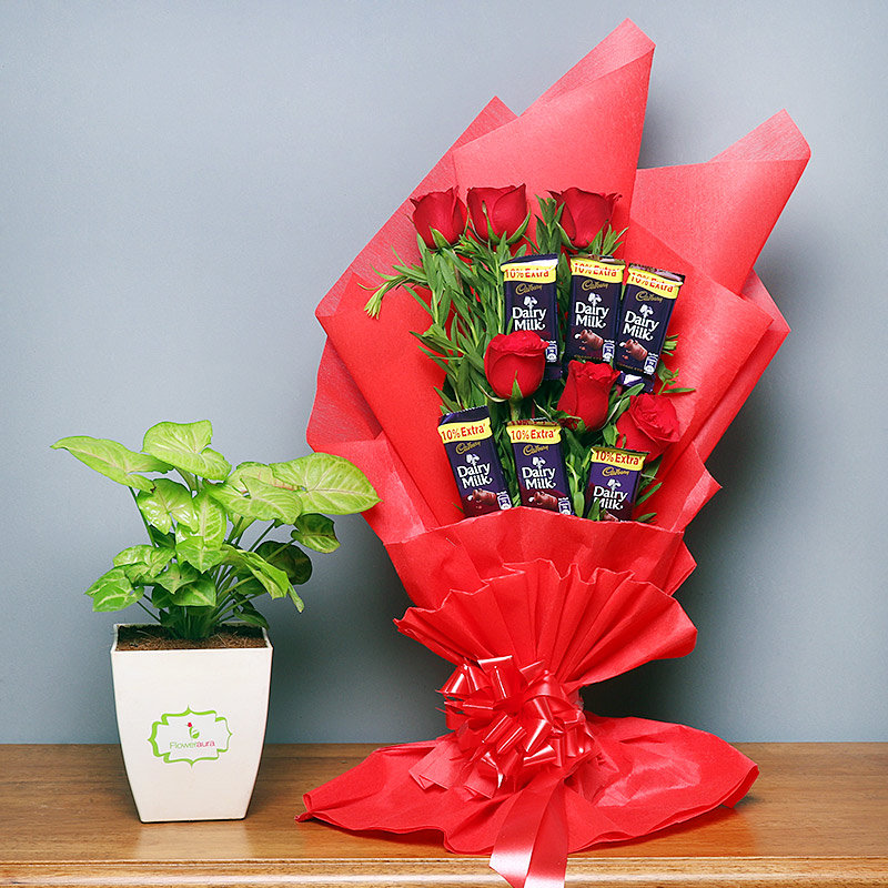 Choco Syngonium Plant Combo - Foliage Plant Indoors in Floweraura Chatura Vase and Bouquet of 6 Dairy Milk Chocolates with 6 Red Roses