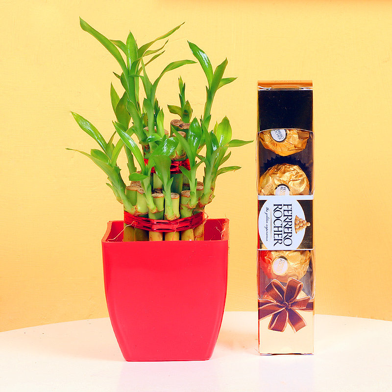 Combo of 2 Layer Bamboo and Chocolates for Valentines Day