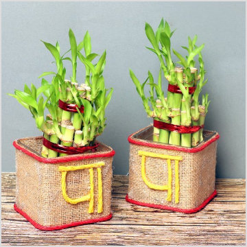 Fathers Day Plant Gifts