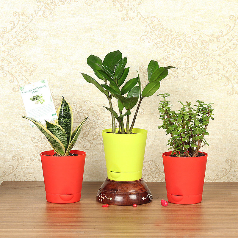 Classic Plant Trio