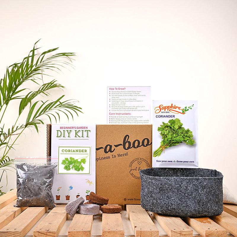 Coriander Diy Herb Kit