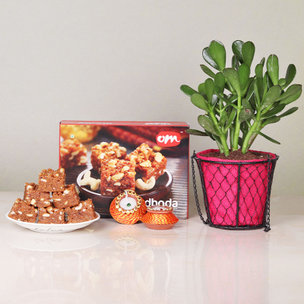Diwali Gift Combo of Crassula Ovata Plant And Doda Barfi Box