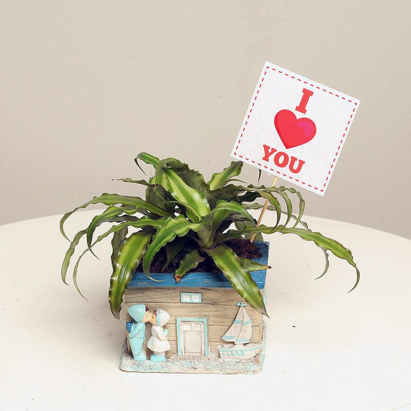 Valentine Couple Plant Gift