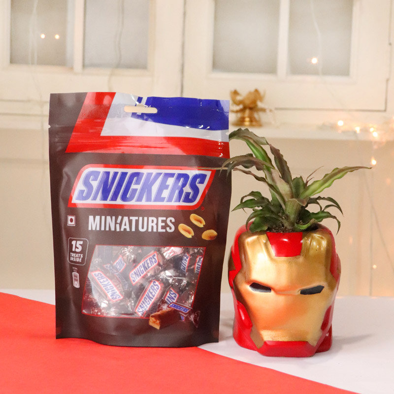 Cryptanthus Plant With Snickers Chocolate