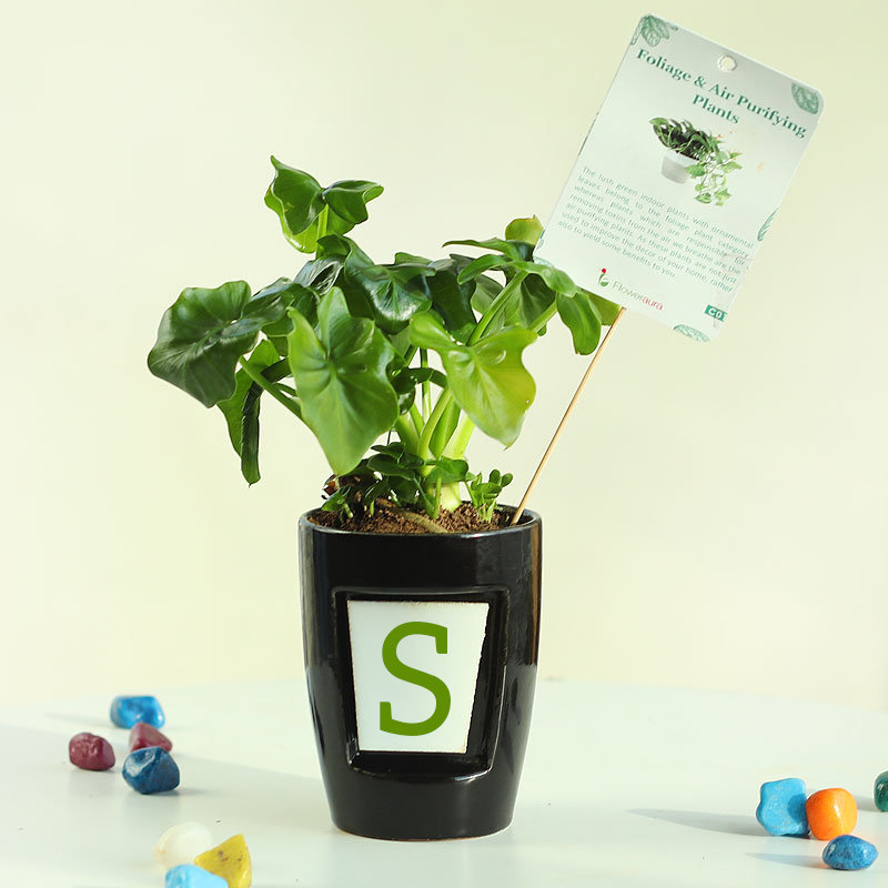 Curly Personalised Plant