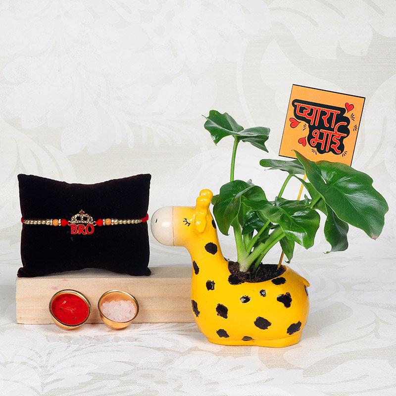 Curly Plant With Bro Rakhi - One Designer Rakhi with Foliage Plant in Cute Giraff Vase
