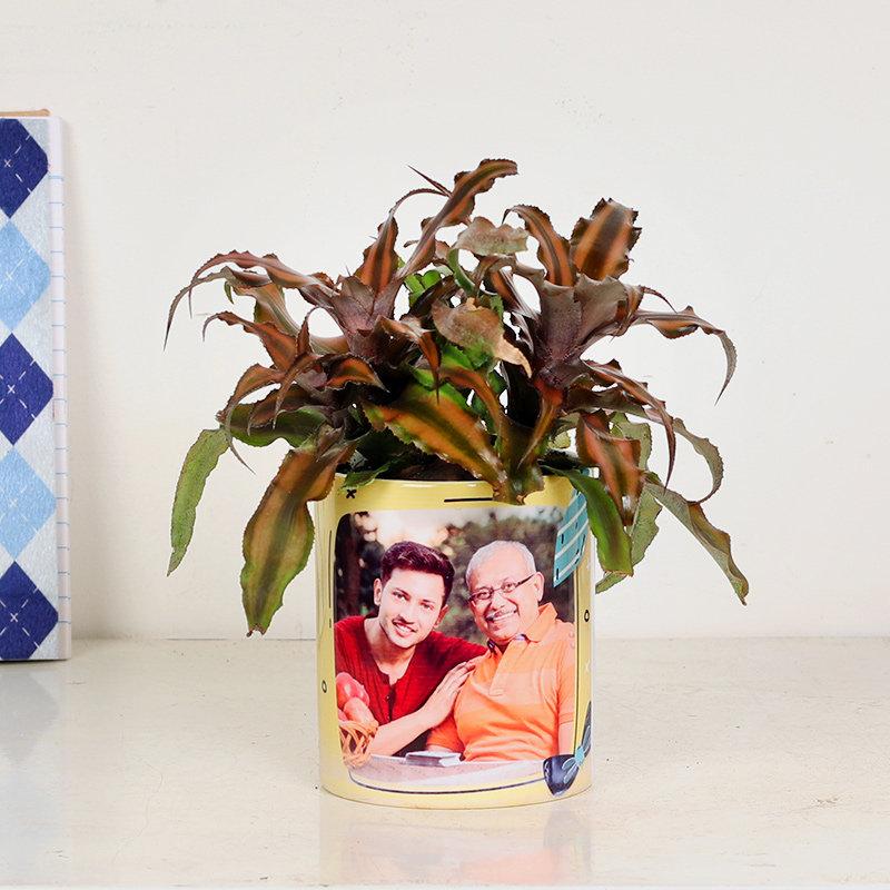 Custom Cryptanthus Plant With Personalised Vase