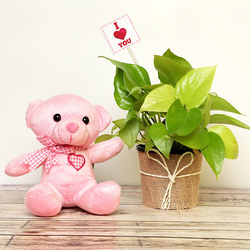 Cuddly Love Money Plant and Teddy Combo