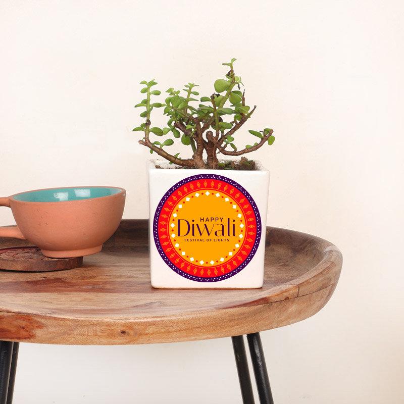 Lovely Jade Plant With Ceramic Vase