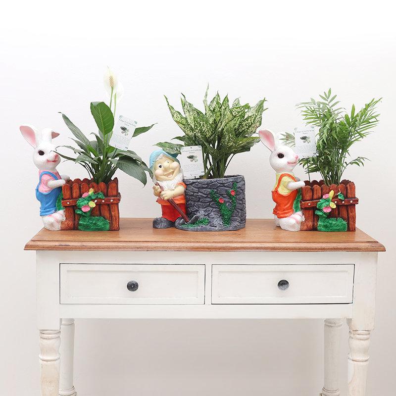 Decorative Plants Trio Combo