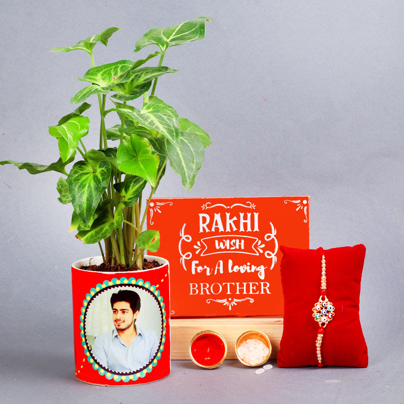 Designer Rakhi With Syngonium Green Plant