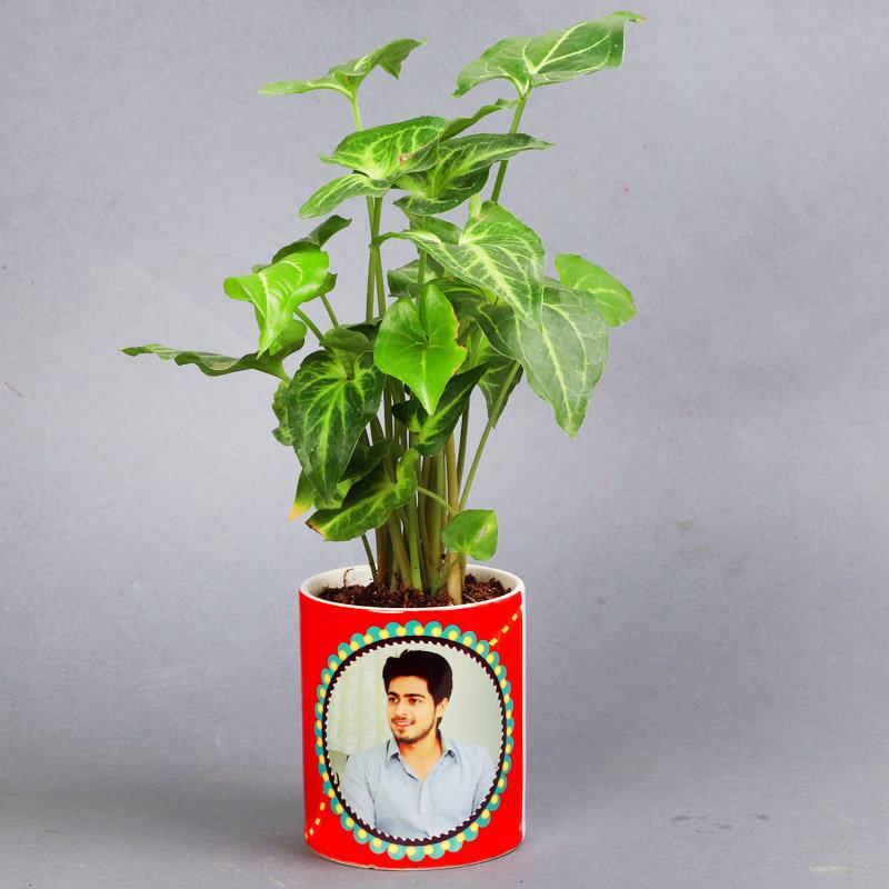 Designer Syngonium Green Plant