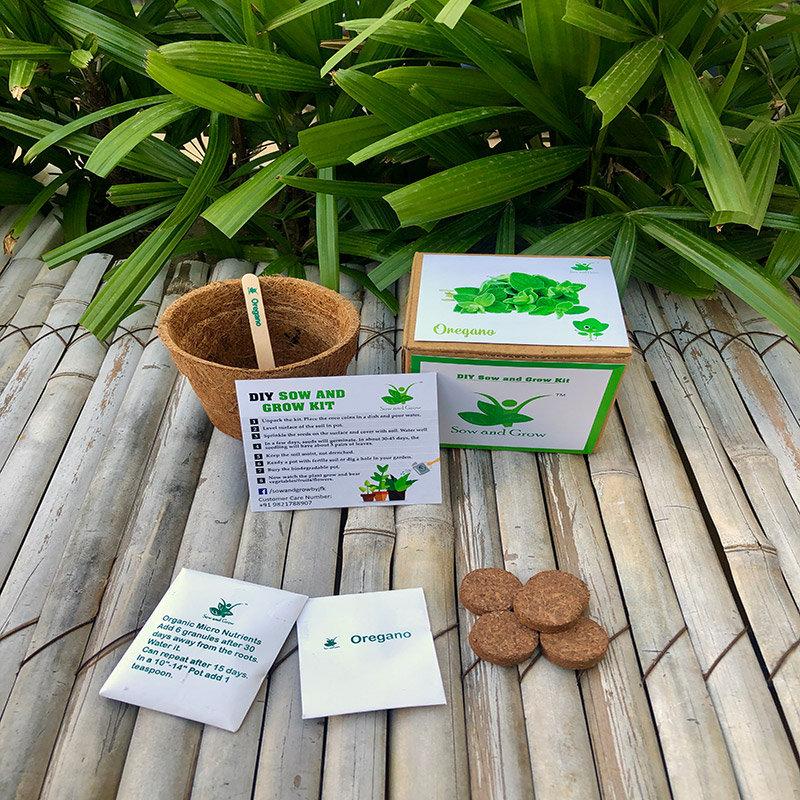 Diy Oregano Gardening Kit