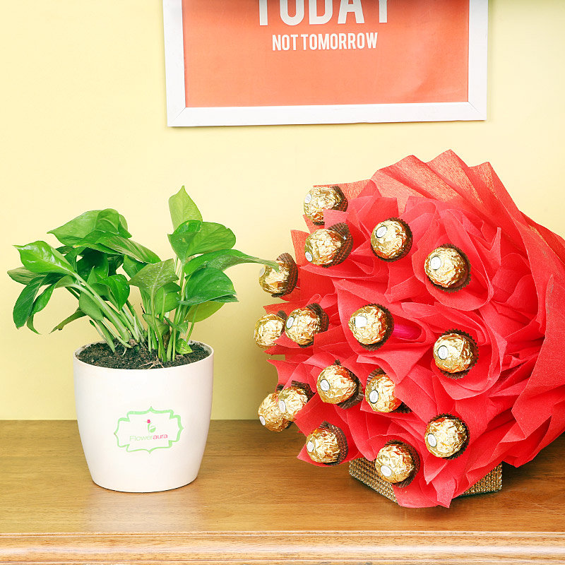 Drool Over Chocolates - Good Luck Plant Height 5 Inches Approx in Floweraura Chatura Vase and Bouquet of 16 Ferrero Rocher Chocolates