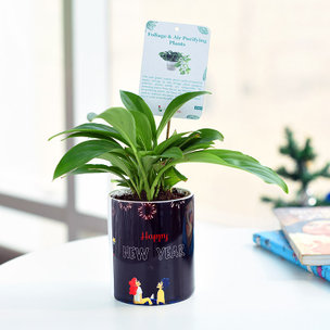 Dwarfy Air Purifier - Air Purifying Plant Indoors in Mug Printed Vase