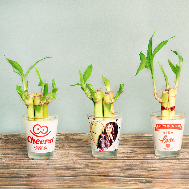 Lucky Bamboo Plants in Personalised Shot Glasses