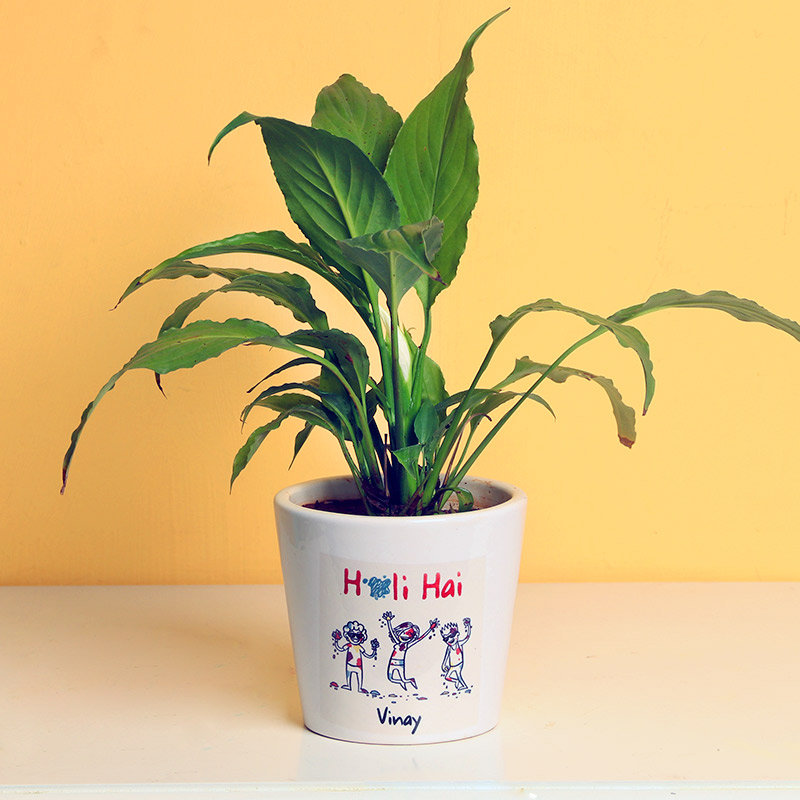 Personalised Peace Lily Holi Plant