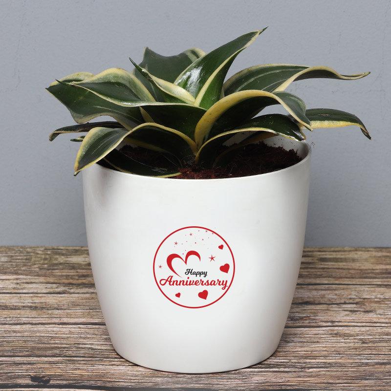 Eternal Anniversary Love - Air Purifying Plant Indoors in Floweraura Rhonda Vase