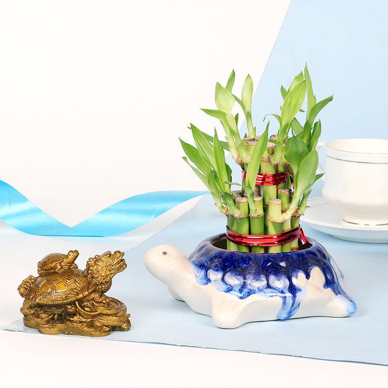 Fengshui Bamboo Dragon Turtle