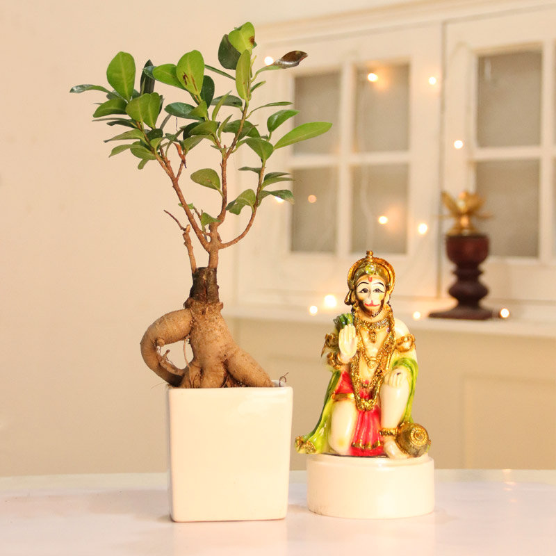 Ficus Bonsai and Hanuman Idol Combo