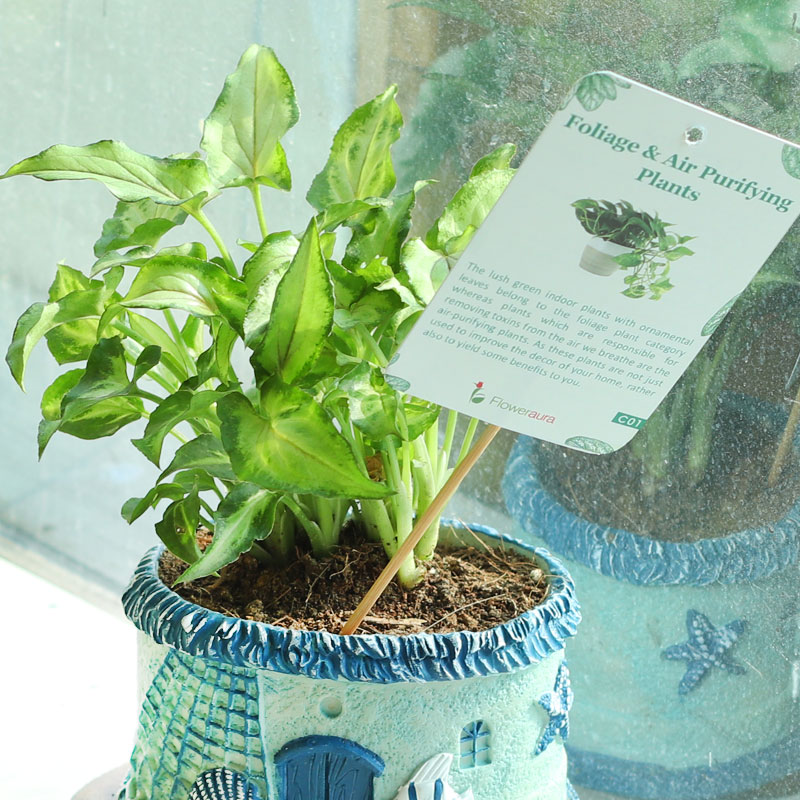 Fishy Vase Arrowhead Plant - Foliage Indoors Plant in Imported Fish House Vase