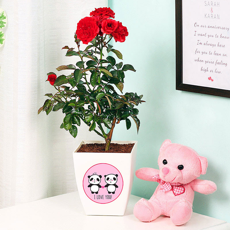 Valentine Day Combo Gift - Cute Teddy With Red Rose Plant