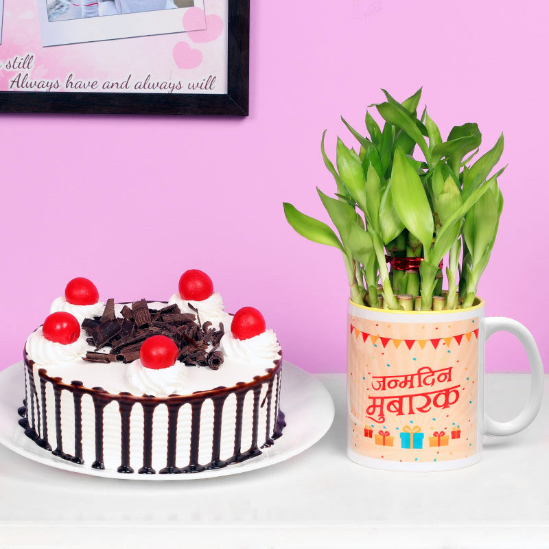 One Printed Ceramic Mugwith 2 Layer Lucky Bamboo and 500gm Blackforest Cake