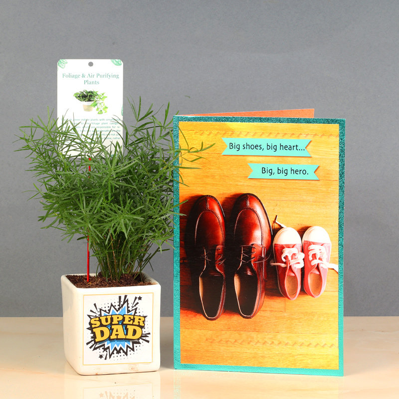 Foxtail Fern Plant For Father's Day