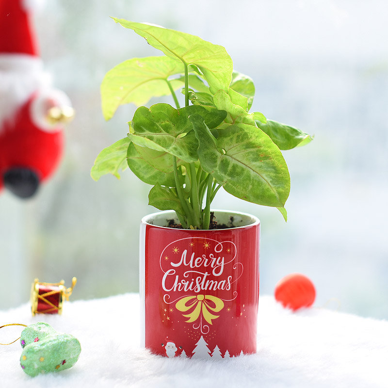 Full Of Wishes Neon Plant - Foliage Plant Indoors in Mug Printed Vase