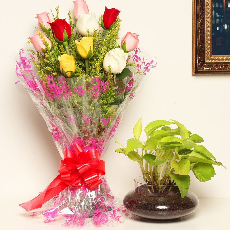 Get Green - Good Luck Plant Indoors in Potouri Vase with Bunch of 10 Mixed Roses