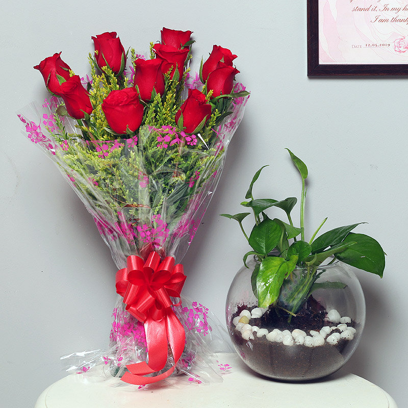 Go Green Festivities - Good Luck Plant Indoors in Gola Vase with Bunch of 10 Red Roses