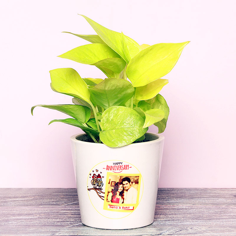 Golden Money Plant in a Personalised Anniversary Vase