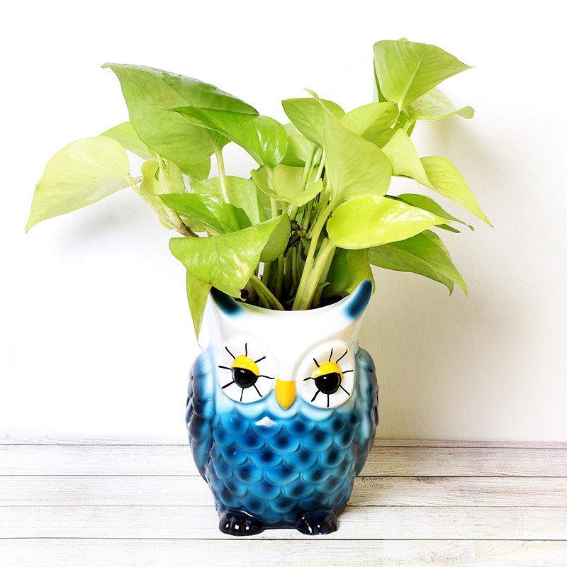 Golden Money Plant In Owl Pot
