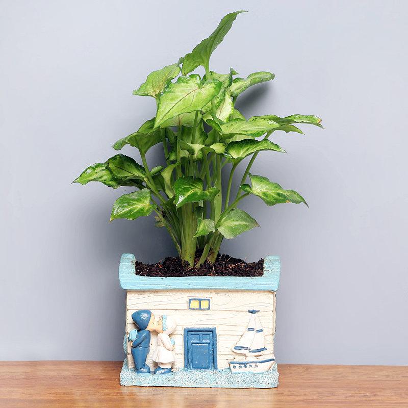 Good Luck Green Plant