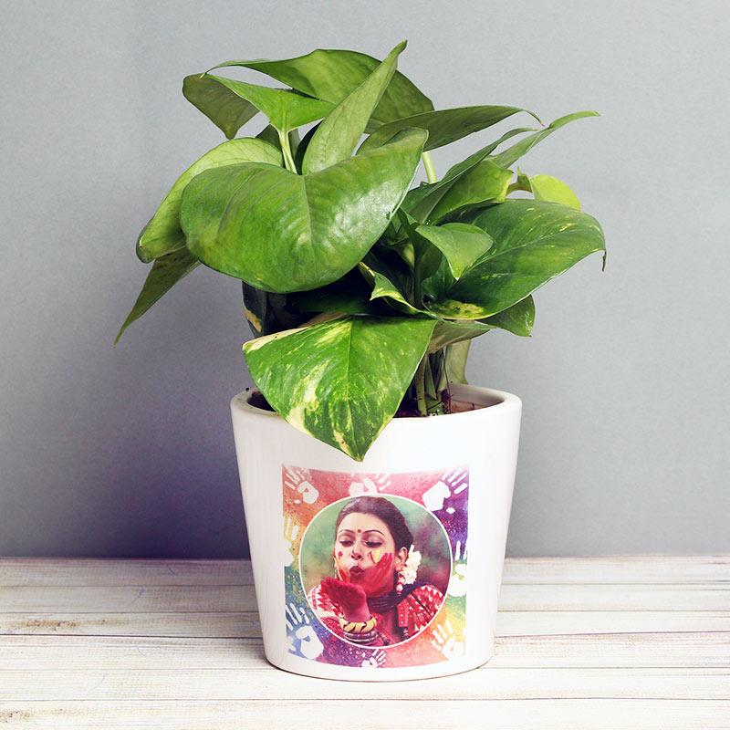 Personalised Holi Money Plant