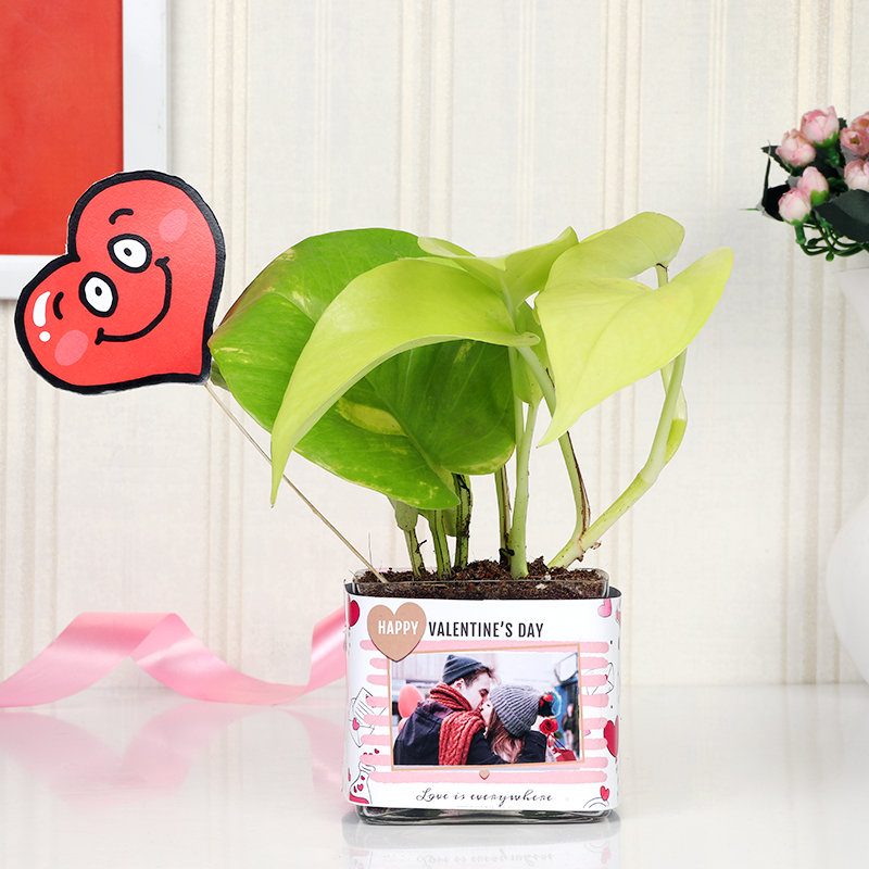 Good Luck Money Plant With Customized Vase