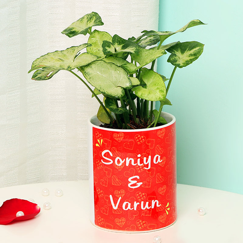 Syngonium Plant in Anniversary Mug