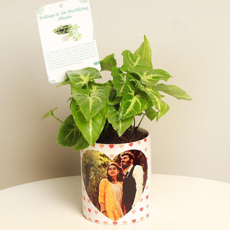 Gift Her Freshness of Green Syngonium