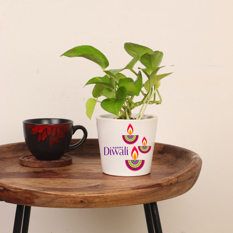 Green Money Plant Corporate Gift