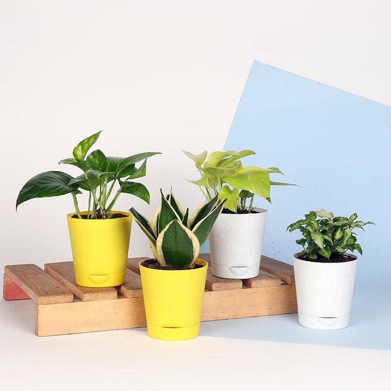 Greeny Plant Combo
