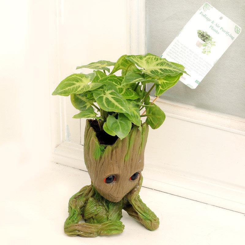 Groot Syngonium Plant Online