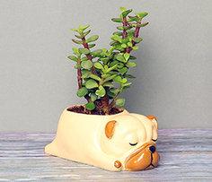 Friendship Day Plants