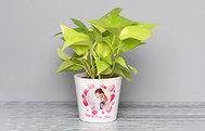 Personalised Plant
