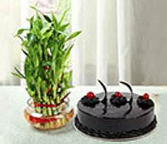 Plants and Cakes