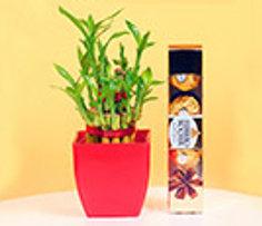 Plants and Chocolates