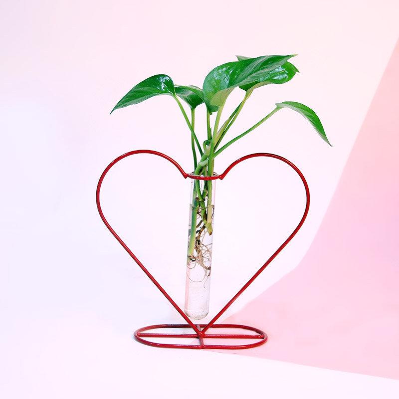 Heart Shape Test Tube Money Plant