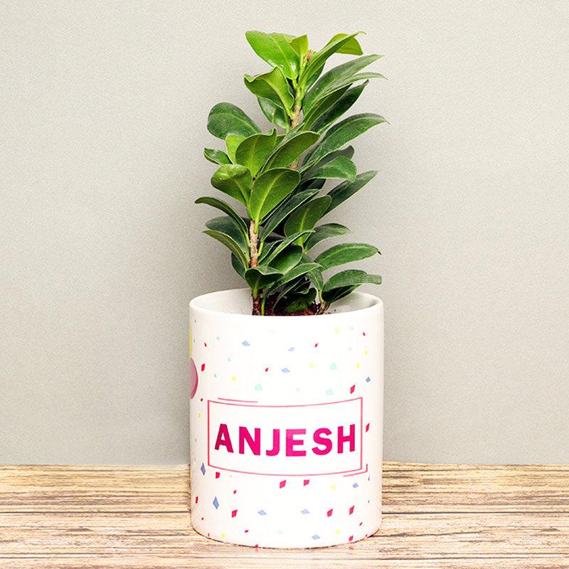 Ficus Compacta Plant in Personalised Birthday Mug