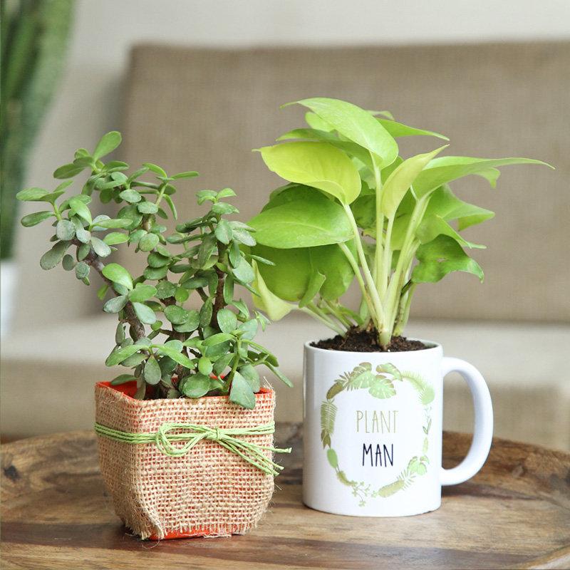 Heartwarming Plant Combo